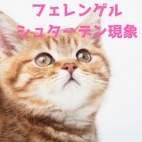 フェレンゲルシュターデン現象とは?由来と猫が何もないところを見る理由